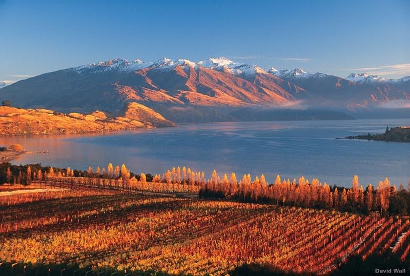 Rippon Valley Vineyard